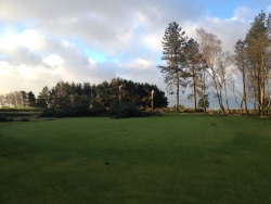Course with trees down